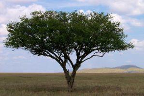 Serengeti National Park (146)