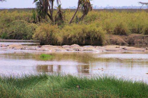 Serengeti National Park (162)
