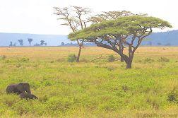 Serengeti National Park (185)