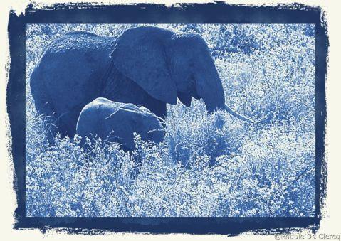 Serengeti National Park (186)