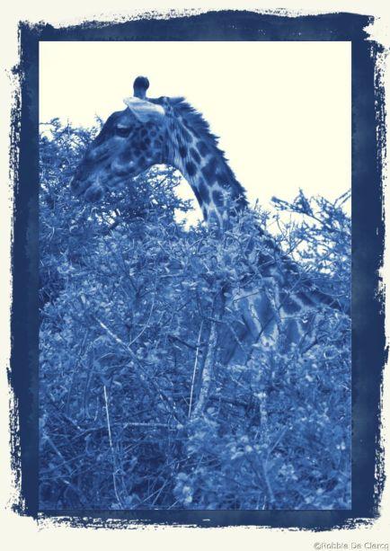 Serengeti National Park (199)