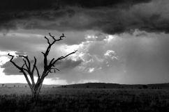 Serengeti National Park (217)