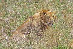 Serengeti National Park (22)