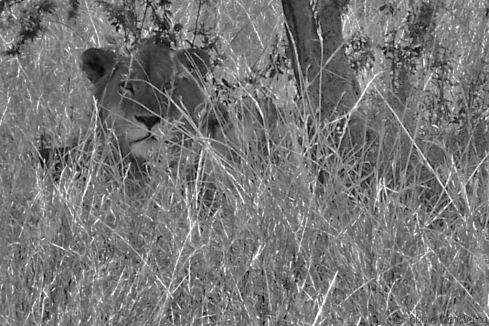 Serengeti National Park (26)