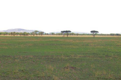 Serengeti National Park (32)