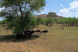 Serengeti National Park (35)