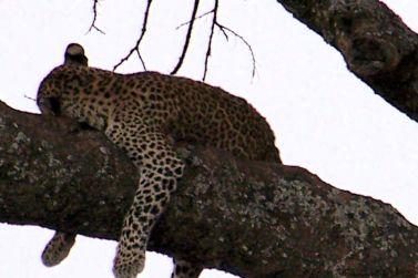 Serengeti National Park (53)