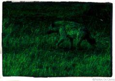 Serengeti National Park (63)