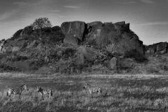 Serengeti National Park (73)
