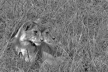 Serengeti National Park (94)