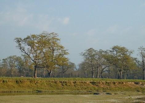 Chitwan 39