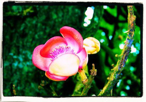 Botanische tuin (18)
