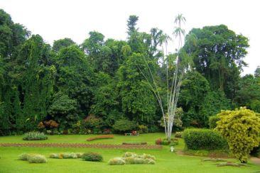 Botanische tuin (24)