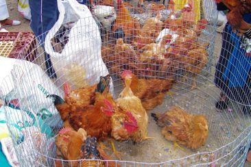 Dierenmarkt (22)