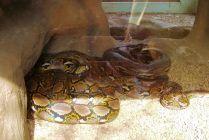 Dumazulu 07 (snake farm in hotel)