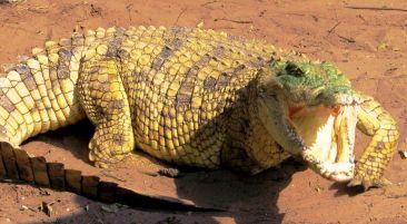 Dumazulu 13 (croc farm in hotel) - kopie (2)