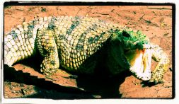 Dumazulu 13 (croc farm in hotel)
