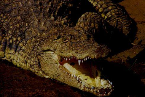 Dumazulu 15 (croc farm in hotel)