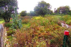 Kirstenbosch Garden (3)