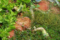 Kirstenbosch Garden (33)