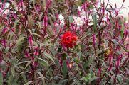 botanical-garden-57