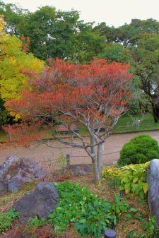 botanical-garden-67