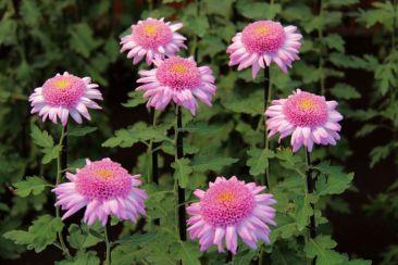 shinjuku-gyoen-garden-104