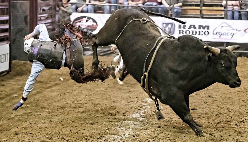 8 Seconds on the Bull