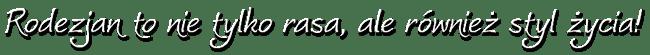 """RHODESIAN RIDGEBACK – Hodowla psów rasowych """"Pręgowce z Jasienia"""""""