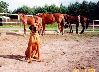 Duma i konie2
