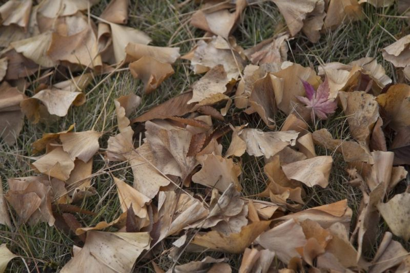 Leaves Foliage Grass Ground Fall  - daxiaob / Pixabay