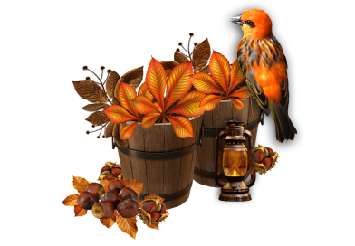 Bird Wooden Buckets Fall Autumn  - serginion / Pixabay