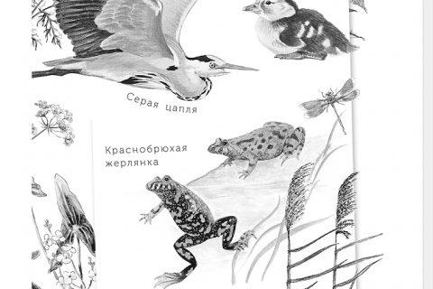 Геннадий Снегирев. Умный дикобраз. С вопросами и ответами для почемучек (страница 1)