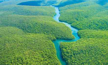 Amazon Forest Grew After Climate Change 2,000 Years Ago