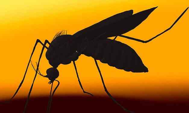 DARPA, Hurricanes, and the Zika Virus