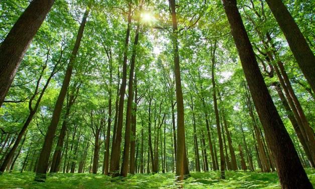 The Myth of Deforestation