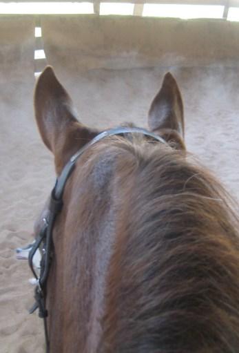 Sam ears 3