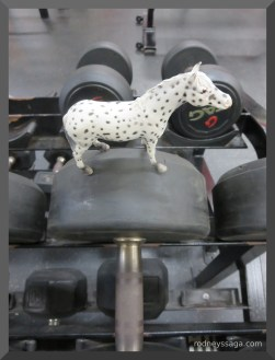 Spotted Working Out