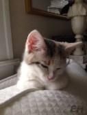 guest-cat-eh-2-1