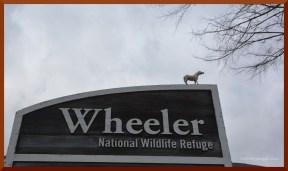 wheeler-spotted-b