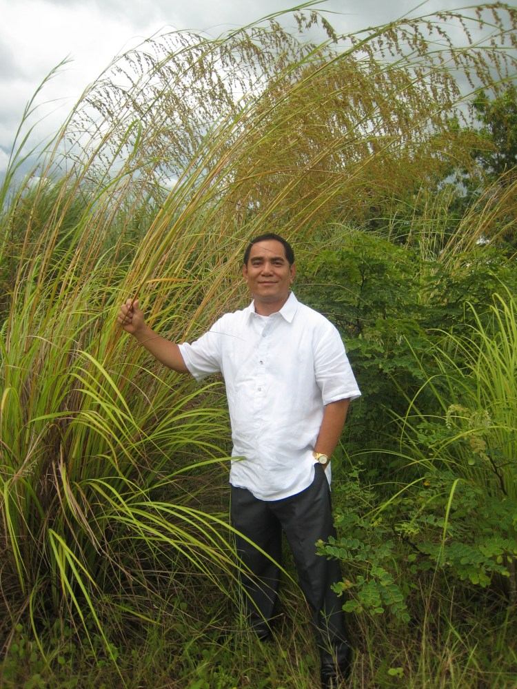 BOTANICAL STRUCTURE OF THE TARLAC GRASS (5/5)