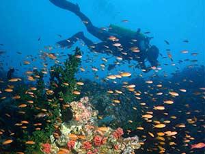 Достопримечательности Нячанга: остров Хон Мун