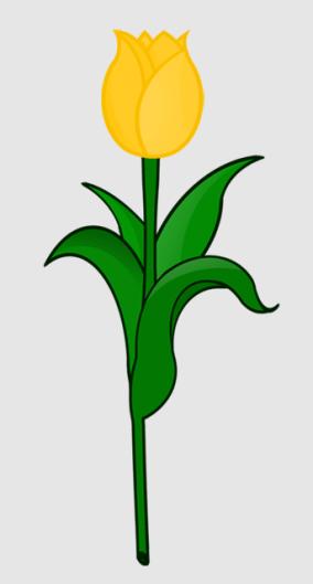 Tulpe_gelb