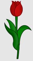 Tulpe_rot