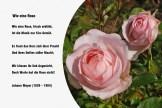 Wie eine Rose – Johann Meyer