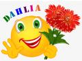 Smiley – Dahlia