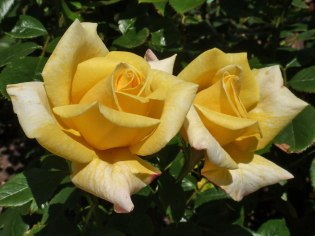 2015_07_01_Rose_5