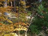Herbstwald 11