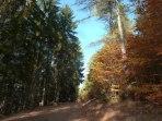 Herbstwald 3