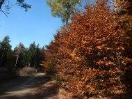 Herbstwald 7